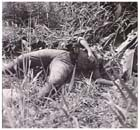 "A dead Japanese soldier found by advancing troops of the Australian 2/22nd Battalion, Beaufort, Borneo, June 1945.  The Japanese reputation for being fanatics who could not be trusted meant that most Australian soldiers adopted a ""shoot first, ask questions later"" policy when confronted with Japanese attempting to surrender.  A similar practice saw the bodies of dead and wounded Japanese routinely shot at by Australian soldiers who had overrun them in the course of an action."